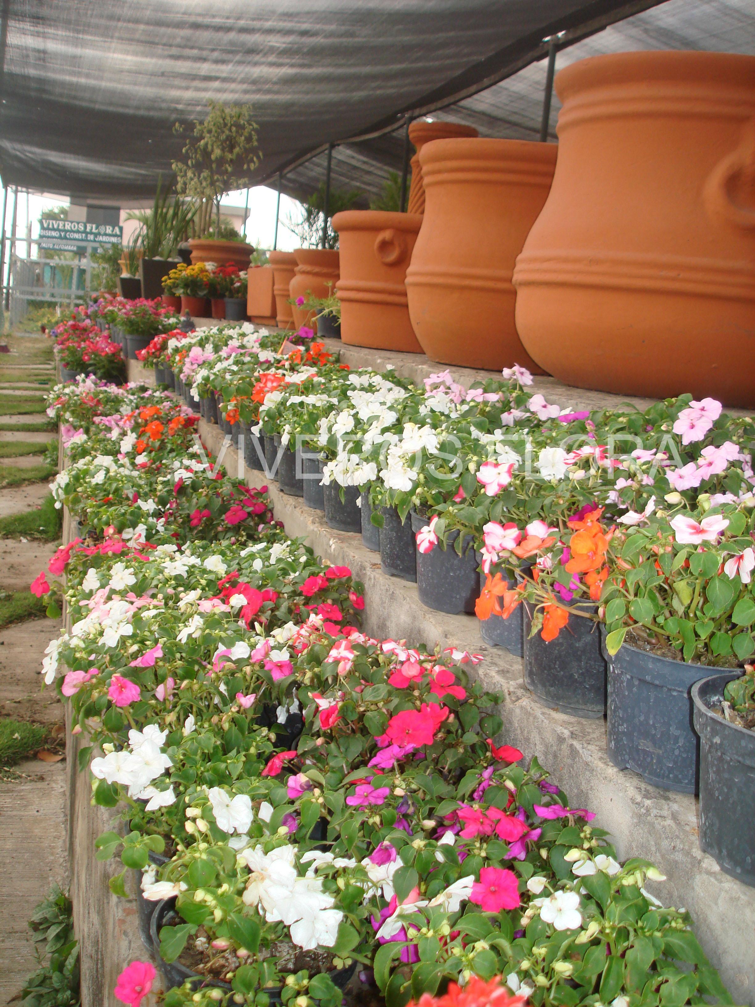 Plantas viveros flora for Viveros de plantas